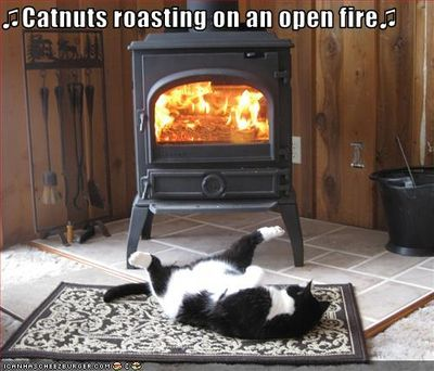 Funny-pictures-cat-roasts-by-fire